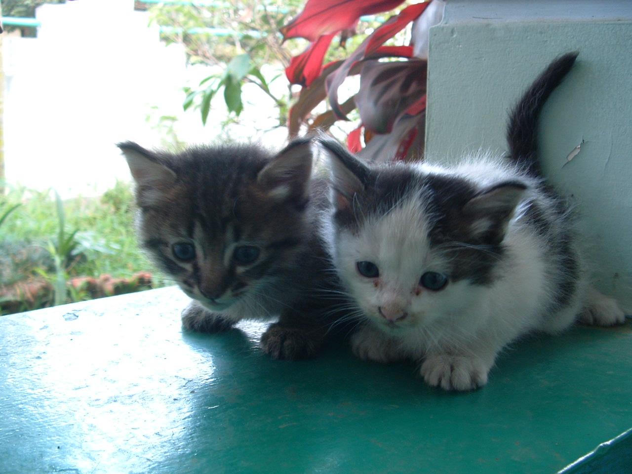 Anak Anak Kucing Berawal Dari Coretan